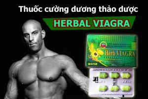 thuốc cường dương herb viagra